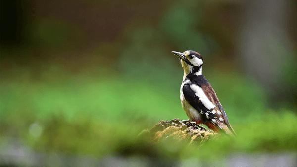 nikon-af-s-nikkor-200-500mm-f5-6-e-ed-vr-objektiv-bird