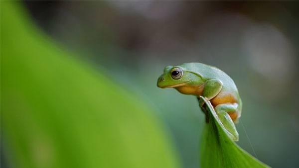 fujifilm-x-t200-frog