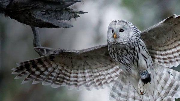 canon-eos-90d-gehaeuse-owl