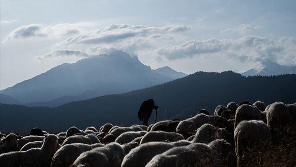 fujifilm-xpro3-sheep