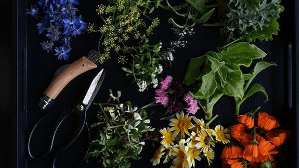 nikon-z6-flowers