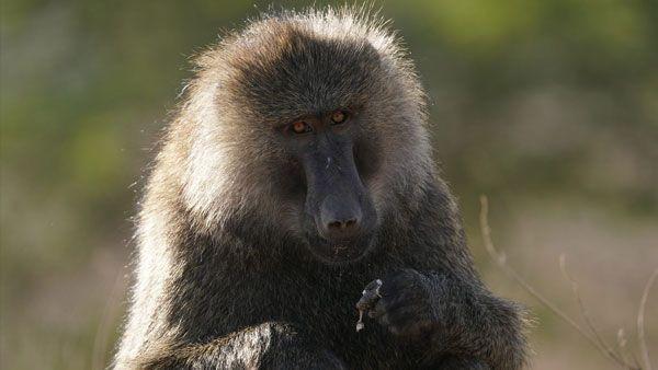 sony-fe-200-600mm-objektiv-ape