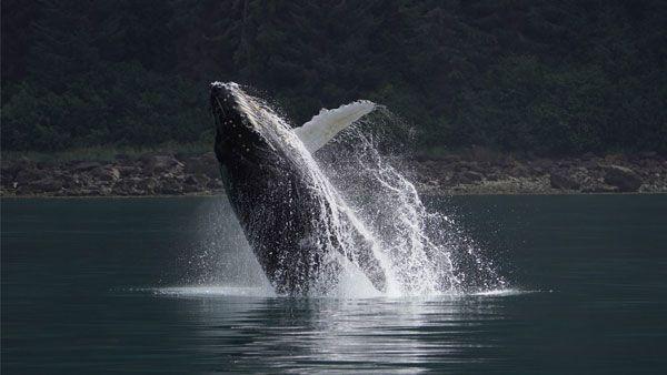 sony-fe-200-600mm-objektiv-whale