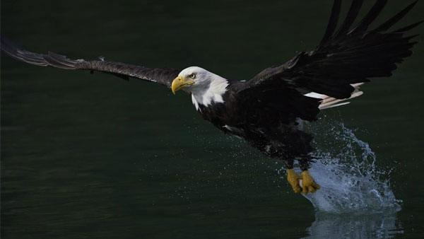sony-alpha-7r-iii-eagle